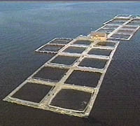 Definicin de acuicultura cultivo marino vivero jaula for Definicion de vivero